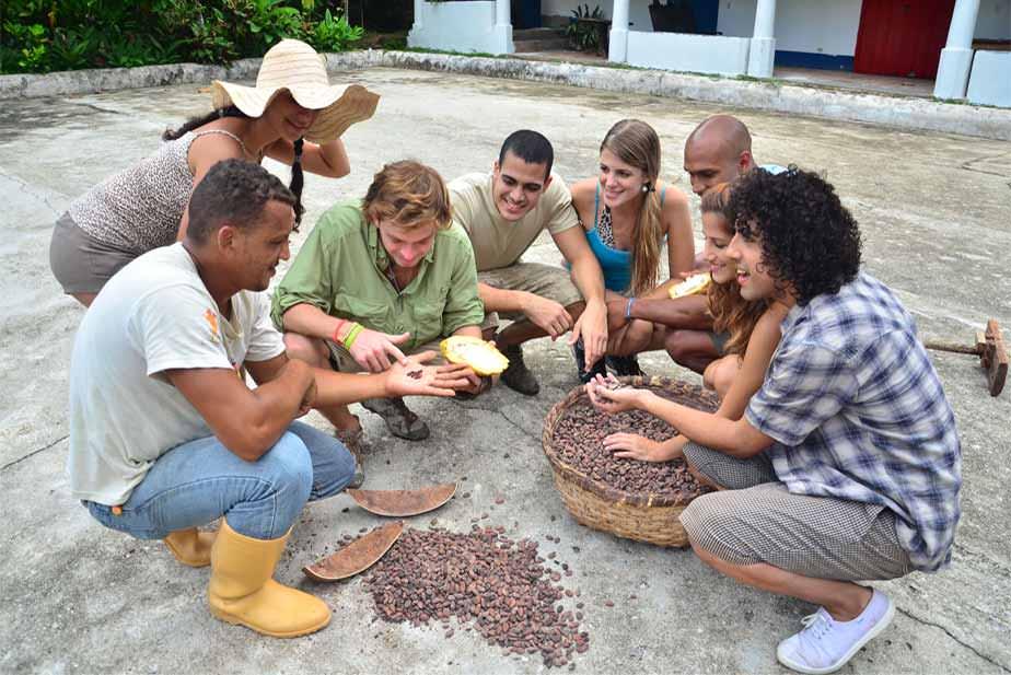 カカオ豆の乾燥サンプル